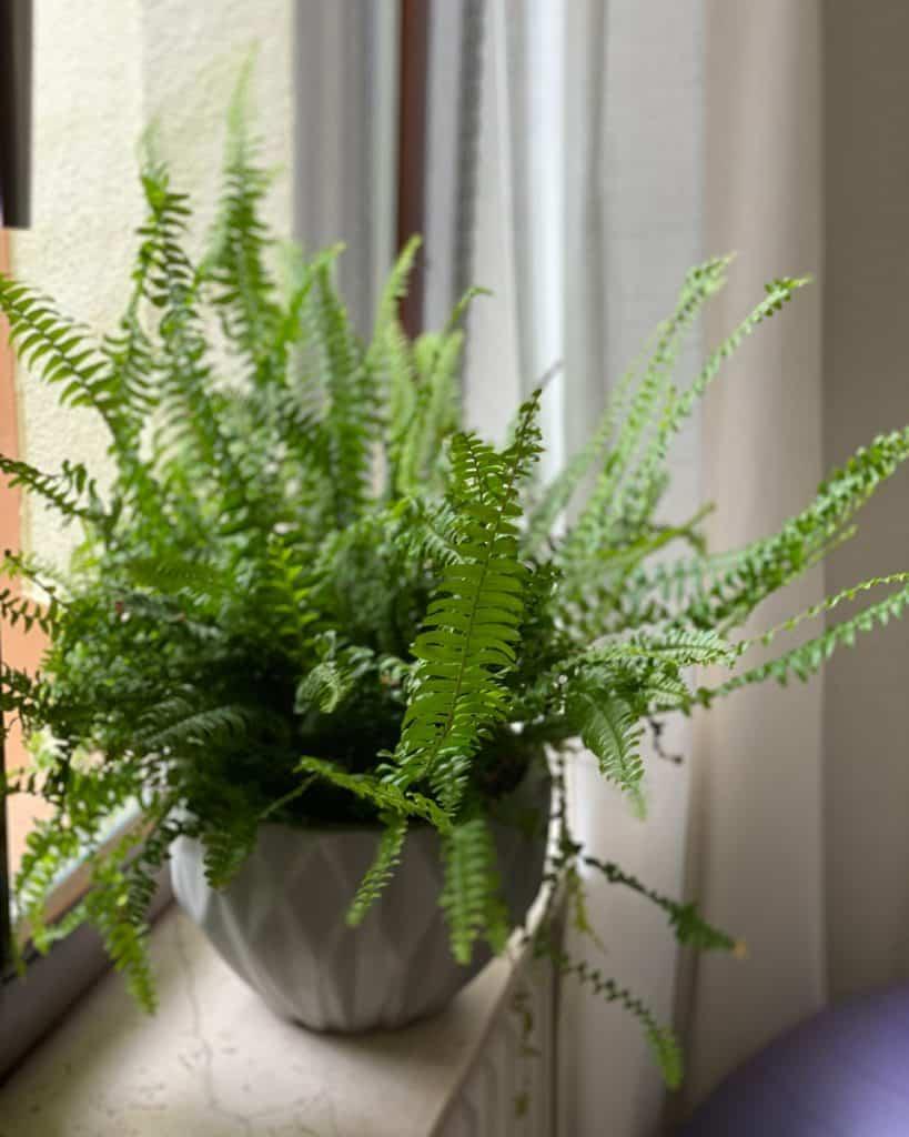 Zimmepflanze an einem Fenster